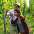 Countryfile puts the focus on hop growing at Hogs Back Brewery